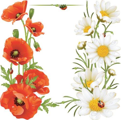 Vector hoa cam cúc và Poppy