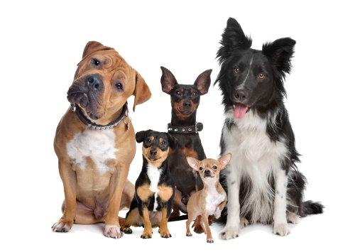 Ảnh chụp nhóm năm chú chó ngồi trước một nền trắng
