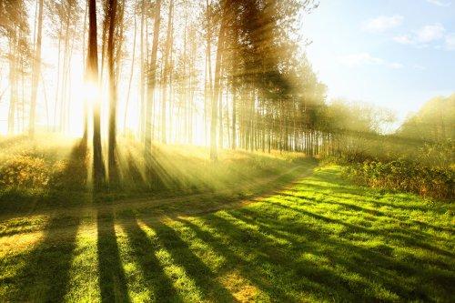 Ảnh chụp nắng sớm trong rừng vào buổi sáng