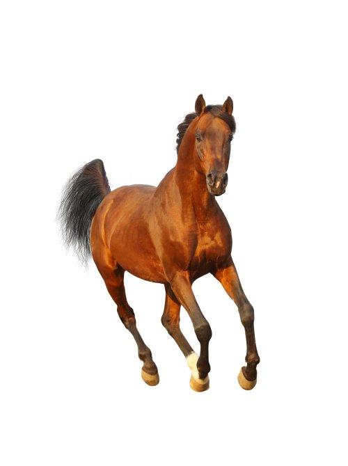 Ảnh chụp con ngựa