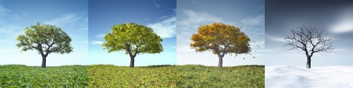 Hình ảnh đẹp của một cây trong bốn mùa