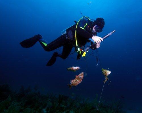 Ảnh chụp ngư dân đánh cá với dụng cụ phóng xiên đâm cá dưới nước