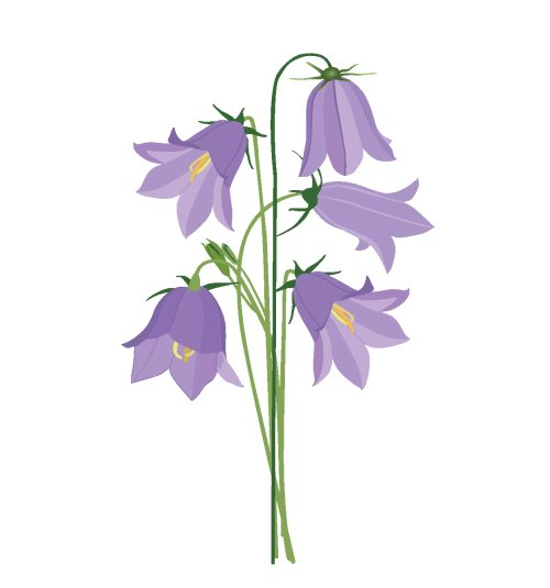 Vector bó hoa chuông xanh