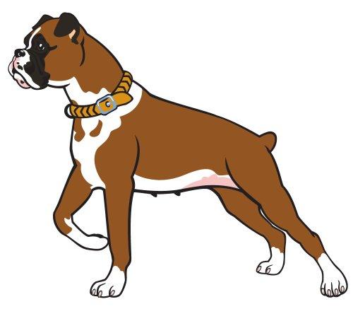 Vector giống chó võ sĩ,được cô lập trên nền trắng