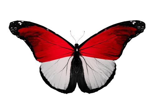 Ảnh chụp bướm cờ Monaco, cô lập trên nền trắng