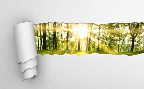 Ảnh chụp giấy xám xé rách và nền rừng xanh