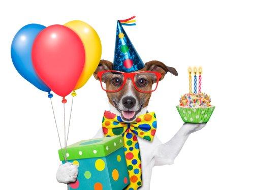 Ảnh sinh nhật chú chó với quả bóng bay và bánh cupcake