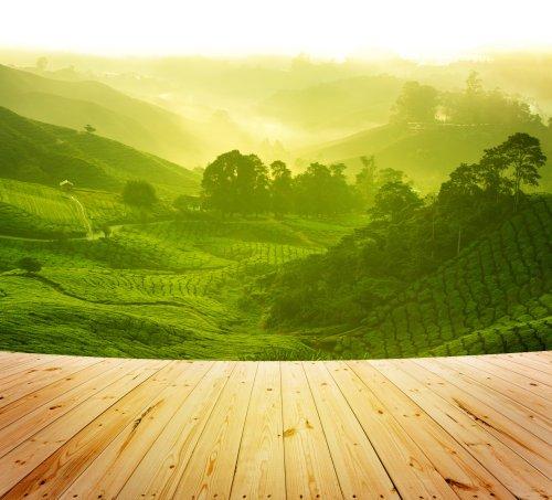 Ảnh nền sàn gỗ bên cạnh vườn chè vào buổi sáng, cao nguyên cameron Malaysia