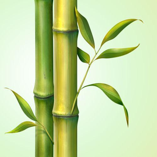 Hình ảnh cây tre và lá