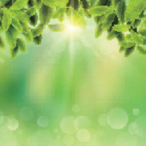 Vector nền mờ tự nhiên với ánh nắng mặt trời và lá