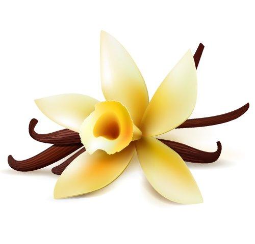 Vector hoa vanilla và vỏ quả