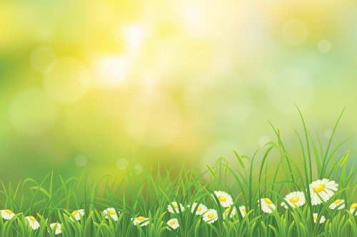 Vector nền mùa xuân thiên nhiên với cỏ xanh và hoa cúc La Mã