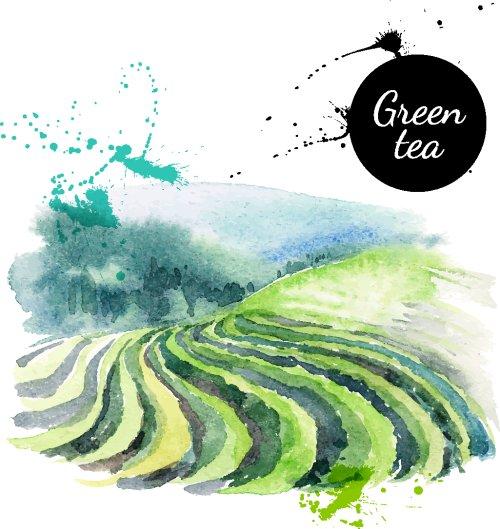 Vector màu nước vẽ tay về đồi trà