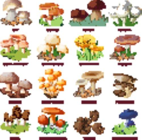 Vector bộ sưu tập hoang dã rừng đầy màu sắc của các loại nấm ăn được