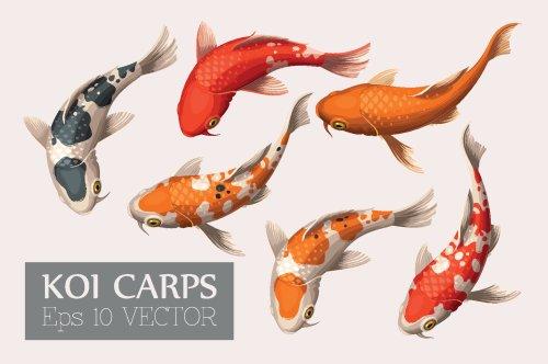 Vector bộ cá chép đẹp và đầy màu sắc