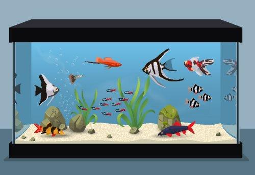 Vector hình ảnh bể cá nước ngọt chứa các loại cá khác nhau