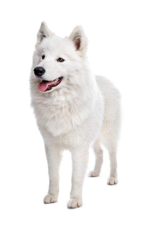 Ảnh chụp Con chó trên nền trắng