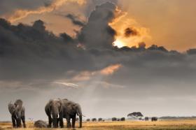Ảnh chụp hoàng hôn trên núi Kilimanjaro với đàn voi
