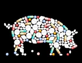 Vector thuốc viên nén và viên nang hình con lợn