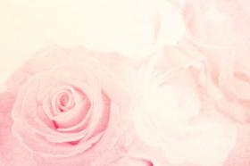 Ảnh hoa hồng nền lãng mạn