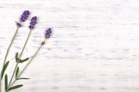 Ảnh hoa oải hương trên nền gỗ trắng