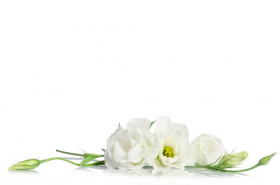 Ảnh hoa đẹp được tách ra trên nền trắng