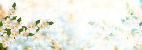 Ảnh chụp hoa nhài trắng